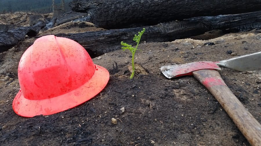 A fire helmet and axe sit on the ground next to a seedling growing out of the ashes