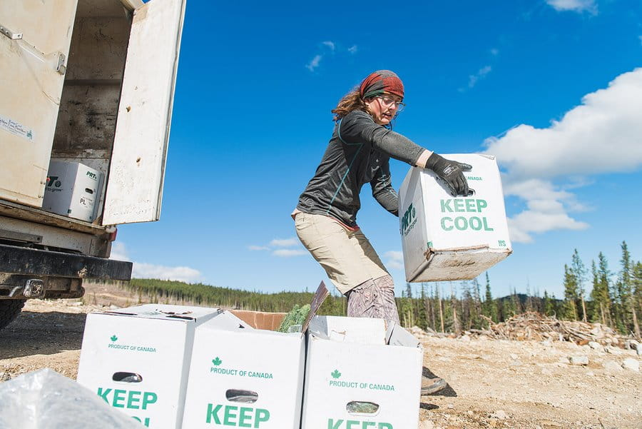 A young woman tree planter prepares more saplings in boxes to be distributed to the tree planters for planting
